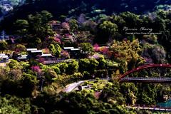 . Renai, Taiwan ( (Morris)) Tags: nikon ngc taiwan       nantou           d7100