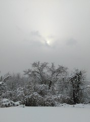 Winter storm Nacio comes through West Virginia (mountaineer life) Tags: county wood winter snow storm weather snowstorm wells wv mineral february 2016 nacio