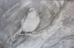 Value Study for Long-Tailed Tit (molossus, who says Life Imitates Doodles) Tags: review giveaway clairefontaine exaclair rhodiarama