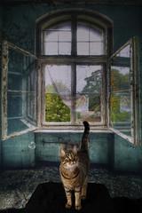 Skidder (JennaAbbottPhotography) Tags: cat tabby kitty skidder