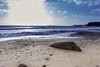 Elephant Seal at Año Nuevo State Park-7938 (马嘉因 / Jiayin Ma) Tags: california park elephant beach water 1 sand state wave route seal año ano nuevo seaocean