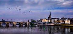 Going Home (VanderImages) Tags: birds river maastricht thenetherlands maas