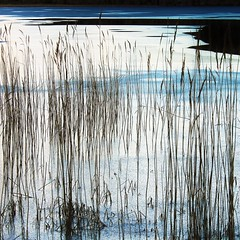 Intermission (1) (eterem) Tags: blue winter plants white lake black cold art ice nature water grass lines norway canon reeds square landscape eos stavanger artistic outdoor fineart silence february thawing watergrass