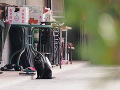 P2081874 (Kyatto) Tags: cat taiwan olympus kit   m43 em10  40150