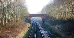 Railway Tracks (cat.preen) Tags: uk trees england train photography photo woods nikon tracks railway elements newforest trainline