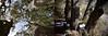 Una o quatre alzines? (Xevi V) Tags: quercus catalonia montserrat catalunya tronc holmoak quercusilex airelliure troncs alzina rebrots alzines holmoaks parcnaturaldelamuntanyademontserrat serraladaprelitoralcatalana isiplou unaoquatrealzines oneorfourhomoaks