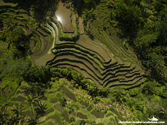 Tegalalang rice terraces - Bali-2016-12 (Christian Loader) Tags: bali field indonesia rice terrace aerial system unesco worldheritagesite agriculture irrigation ubud paddyfield riceterrace drone phantom3 tegalalang aerialimage subak tegallalang scubazoo christianloader tegalalangriceterrace scubazooimages djiphantom3professional
