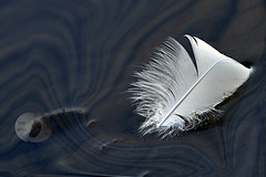 Adrift... (Vivid_dreams) Tags: white detail art water artistic digitalart feather digitalphotography digitalmanipulation abstractnature softwhite artisticmanipulation