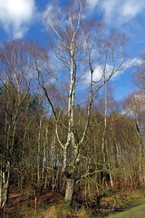 25.3.16 Delamere Forest 22 (donald judge) Tags: trees water forest countryside cheshire mere delamere