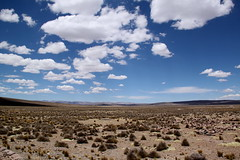 IMG_5409 (nouailleric) Tags: peru canon altiplano prou eos500d efs18135mm reservedesalinasyaguadasblancas
