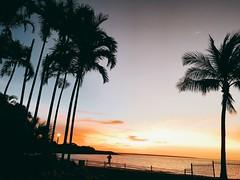 Darwin (kelliejane) Tags: sunset nt australia darwin palm palmtrees northernterritory skycity 2016 mindilbeach kelliejane skycitydarwin