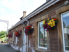 SC6-210 - Uddingston railway station flowers (Droigheann) Tags: udd