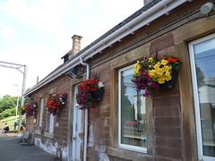 SC6-210 - Uddingston railway station flowers (Droigheann) Tags: udd