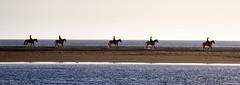 5 jinetes (Franci Esteban) Tags: luz caballos andalucía 5 playa cinco cádiz tarifa jinetes luznatural playadeloslances parajenaturaldeloslances luzdelsur