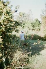 (rebecaarh) Tags: film nature 35mm gold coast australia canonae1 agfavista400