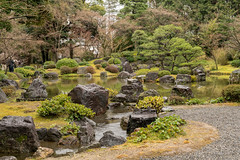 20160229-110537_5K_80 (pya) Tags: kyoto  camellia plumblossoms jonangu     weepingplumblossoms