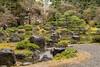 20160229-110537_5K_80 (pya) Tags: kyoto 京都 camellia plumblossoms jonangu 梅花 茶花 城南宮 椿花 weepingplumblossoms