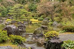 20160229-110323_5K_80 (pya) Tags: kyoto  camellia plumblossoms jonangu     weepingplumblossoms