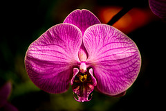 Orchid (Jordan Salkin) Tags: camera pink newyork color macro nature colors photography photo nikon colorful pretty photographer awesome small like photographic follow rochester explore photograph micro likes naturephotography followme naturephoto naturephotographer naturephotograph