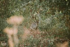 _N6A2923 (Kappas valokuvaamo) Tags: africa park wild game nature animal animals canon landscape drive kenya wildlife east safari national kenia tsavo afrikka 5dmkiii 5dmk3 5dmarkiii 5dmark3