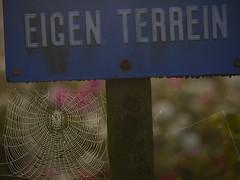 EnCaSA. (Warmoezenier) Tags: private spider web spin property zeeland thuis encasa bord terrein eigen