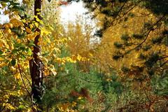 DSC_6019 (Rustam Bikbov) Tags: autumn september 2012    sverdlovskoblast