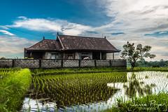 Bali Living (JamiePryerPhotography) Tags: trip travel bali indonesia photography nikon jamie april nikkor indo d800 2015 pryer nikond800 jamiepryer april2015 jamiepryerphotographycom