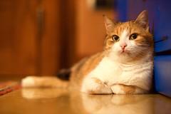 Cat (gekibul) Tags: italy cats house cute animals cat casa nikon italia bokeh colori gatto 70200 gatti f28 domestico animali animale vr interni micio gattino d4s