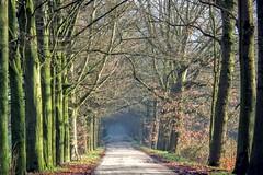 DSCF7502.tif (Ad Sebregts) Tags: tree path margriet