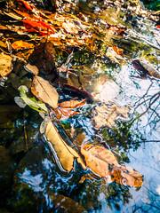 PhoTones Works #7448 (TAKUMA KIMURA) Tags: water leaves river landscape dead scenery natural air olympus fallen   kimura    takuma  a01   photones