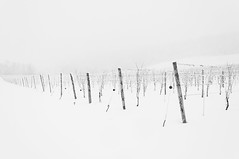 Winter Winery (Grant is a Grant) Tags: ca winter snow canada novascotia ns snowstorm january kitlens wolfville winery nikkor1855mm nikond90 gaspereauvineyards