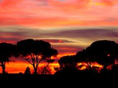 Ocaso naranja (alfonsocarlospalencia) Tags: luz atardecer eva rboles negro segovia nubes invierno pinos rosas ocaso sombras siluetas paleta naranjas crepsculo violetas contrastes amarillos arrebato fuerza pasin romntico