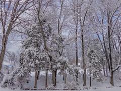 DSC01606-2 (johnjmurphyiii) Tags: winter usa snow connecticut shelly cromwell originaljpeg johnjmurphyiii 06416 sonycybershotdsch90
