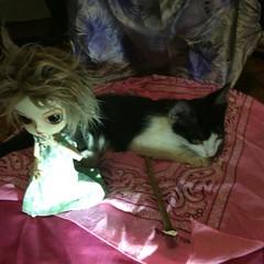 As meninas (MariMahe) Tags: kitten dal monomono