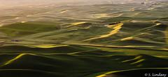 4 (Wandering Sensors) Tags: sunrise wa wheatfields palouse steptoebutte