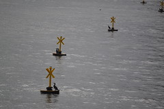 Cormorants on the Thames (curly_em) Tags: london water westminster birds riverthames