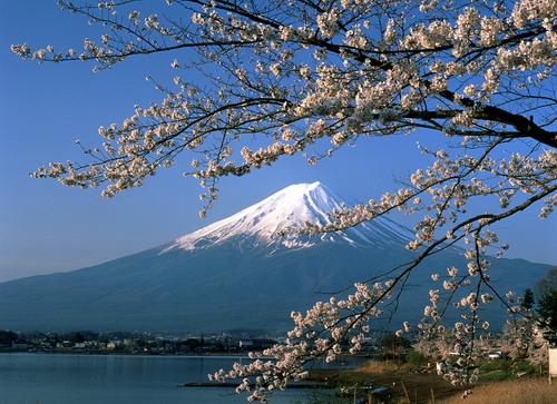 Giảm ngay 1,2 triệu đồng cho tour Nhật mùa hoa anh đào