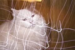 Beau (lordgogurt) Tags: longexposure light cute animal night cat dark fur lights feline exposure darkness pussy kitty whiskers nighttime