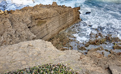 Limestone cliffs, Atlantic Ocean, San Juan, Puerto Rico (Chuck Sutherland) Tags: ocean cliff water waves puertorico sanjuan limestone pr atlanticocean bluff carbonate limestonecliffs