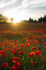 DSC04606 (wheelsy1) Tags: walking derbyshire poppy chesterfield sheepbridge poppyfield unstone richardwiles
