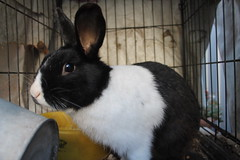 IMG_3420 (Gioser_Chivas) Tags: rabbit bunny animal conejo mascota mamifero vertebrado gioserchivas