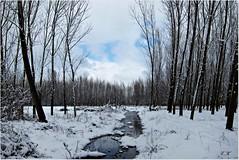 Snow (eminkoyuncu) Tags: winter snow nature