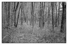 Bare - Rockville, MD (gastwa) Tags: trees blackandwhite bw white black nature monochrome forest point dc washington shoot maryland super olympus ps andrew xp2 35 rc ilford rockville gastwirth andrewgastwirth