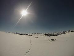 Plateau de Beille - Ariège (FloLfp) Tags: soleil rando bleu ciel liberté neige extérieur randonnée ariège rêve pyrénnées raquettes