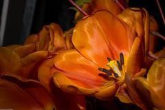 Garden show (wacamerabuff) Tags: seattle flowers plant flower washington