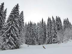 Snow covered trees, les Gets (Alta alatis patent) Tags: trees snow snowboarder wintersport skier lesgets