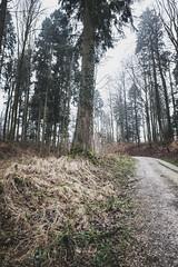Photo Walk Stadtwald, Solothurn (Andris Linz   Photography) Tags: wood trees brown green wet rain forest rainy holz wald regen nass