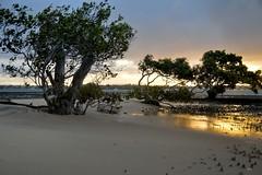 DSC_0038 (RUMTIME) Tags: sunset beach queensland coochie coochiemudlo