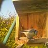01-20160323_090511-00 (www.cabane-oiseaux.org) Tags: 09h 20160323 2016032309h012016032309051100jpg