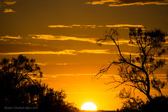 Golden Sunrise (revita7) Tags: rural sunrise elements outback southaustralia
